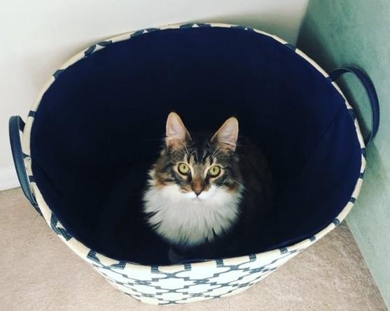 Laura's cat Nacho Man